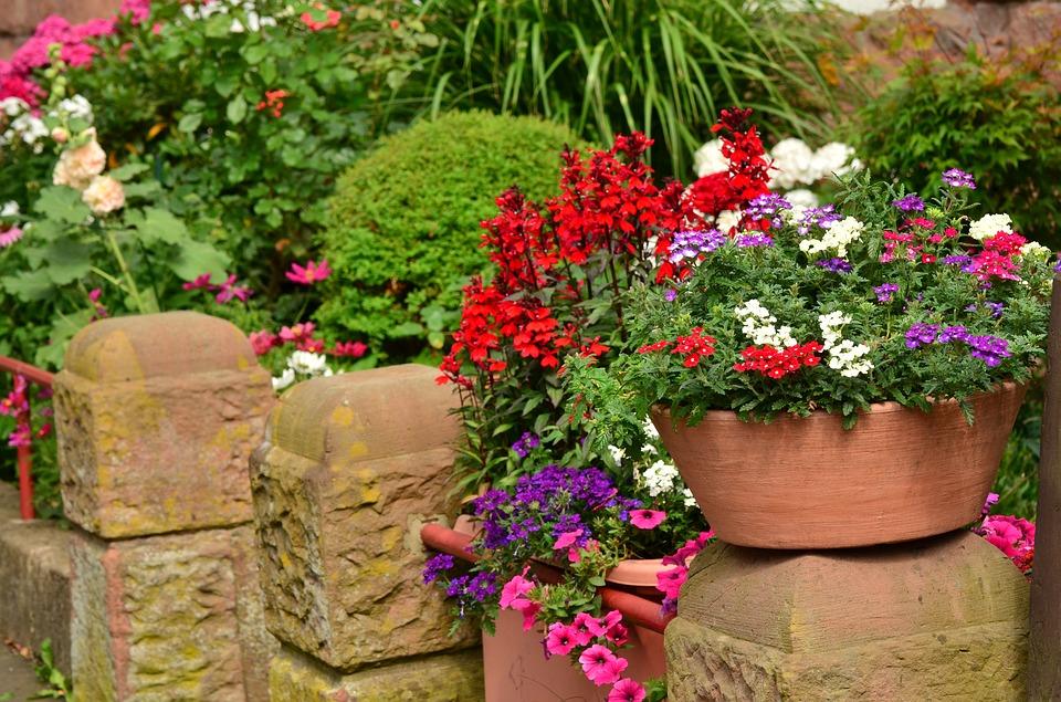 květiny na zídce